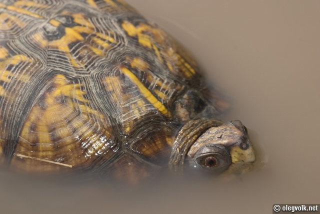 Box turtle at a day spa.