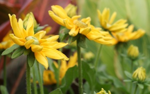 yellowflowers4950.jpg