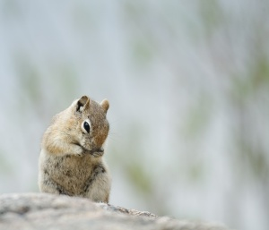 washing_chipmunk_0484.jpg