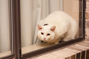 window_cat_5469