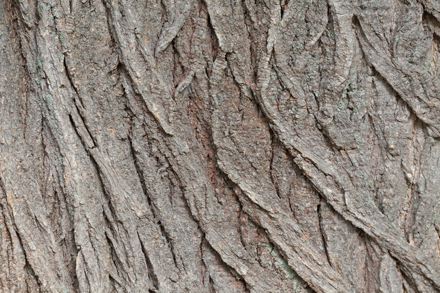rough_bark_8343web