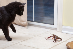 cat_crawfish_5711