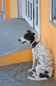 waiting_dog_1020023