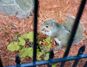 squirrel_DSC5797web