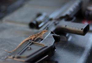 rifle_lizard_D6A7495