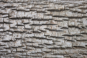 rough_bark_1030931web